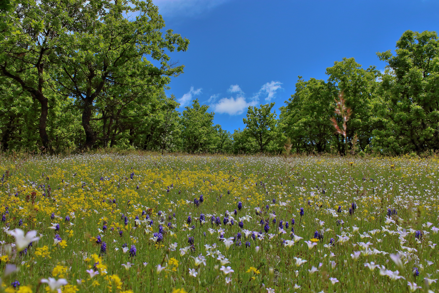 Wild Flowers In Spring Neophron Tours
